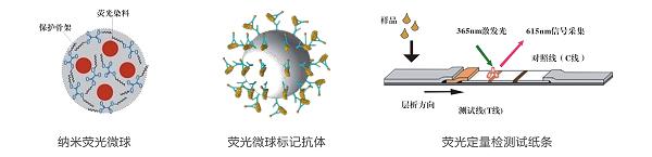 T-2毒素荧光定量快速检测系统性能
