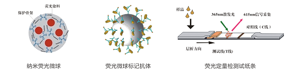 铅离子荧光定量检测试纸条检测原理