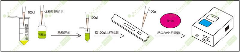 黄曲霉毒素荧光定量检测过程