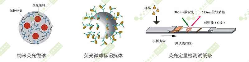 玉米赤霉烯酮荧光定量快速检测原理
